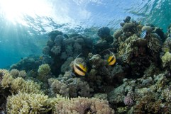 Bannerfish and sunbeams