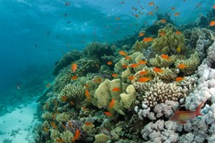 Beautiful Reef with colourful Fish
