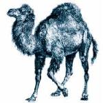 Version 5.12: Perl wurde ein Update spendiert