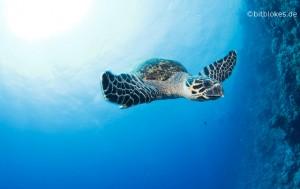 Meeresschildkröte Teaser
