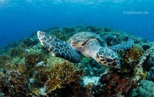 Meeresschildkröte und Riff Teaser