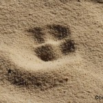 Freebie-Freitag: Kostenloses Hintergrundbild / Wallpaper – Spur im Sand