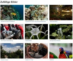 kostenlose Wallpaper / Hintergrundbilder