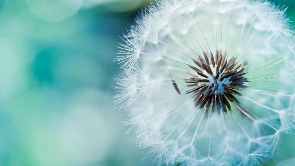 Blue Dandelion (Jaorizabal)