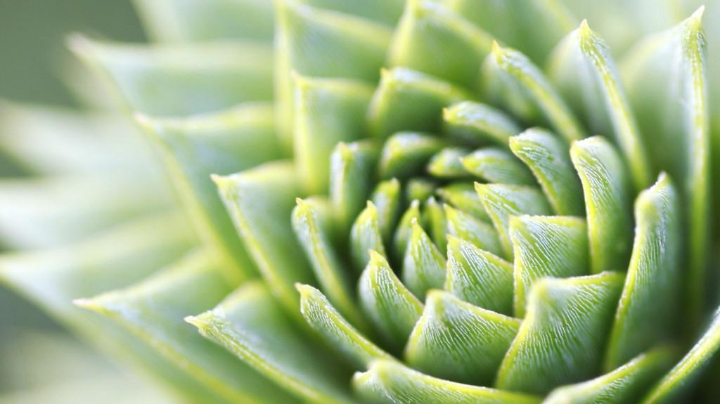Green Plant (Simon Schlegl)