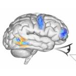 Wissenschaftler haben virtuelles menschliches Gehirn erschaffen – Powered by Linux!