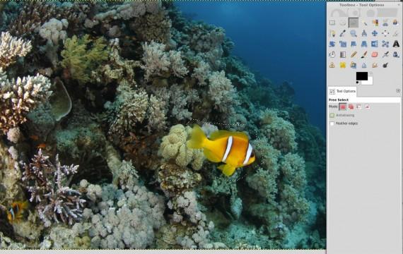 Clownfisch vor Heal Selection ausgewählt