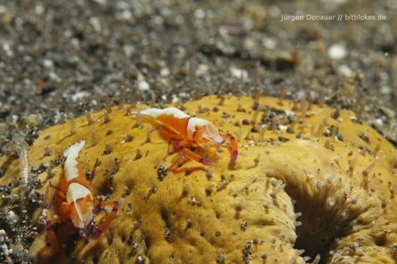 Shrimps im Doppelpack