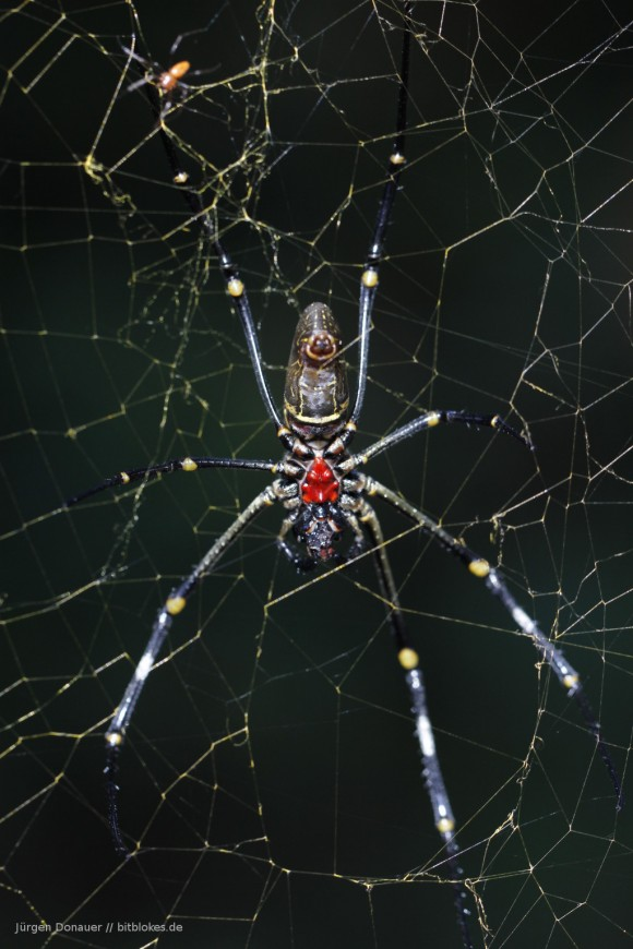 Das Spinnchen vor dem Tore