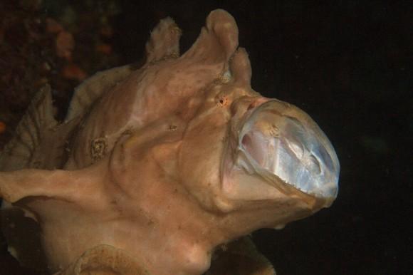 Frogfish: nachbearbeitet