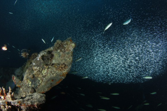 Thistlegorm: Fischwolke
