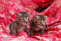 Neugierige Brüder