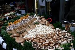 Pilze am Markt
