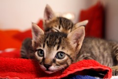 Kätzchen: Brüder