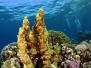 Neues Ägypten unter Wasser