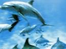 wp_1280x1024_delfine