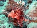 wp_1280x1024_feuerfisch