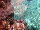 wp_1280x1024_glasfische_korallen