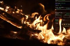 TinyMe 2012.03.05 Acorn