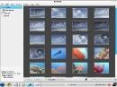 Zorin OS 4 Shotwell