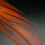 Feather_by_quinn.anya