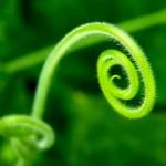 Spiral_by_fiЯas