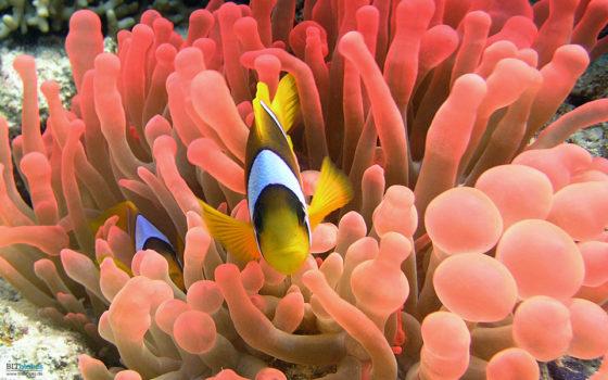 Das Casino über das Aquarium gehackt - schöne neue Welt!