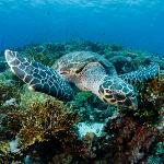 Bannerfish Bay Dahab: Die freundlichste Unterwasser-Schildkröte, der ich je begegnet bin