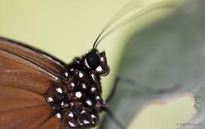 Macro-Aufnahme Schmetterling (Download Link 2)
