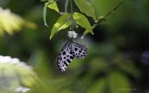Macro-Aufnahme Schmetterling (Download Link 3)