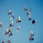 Flocking von noombox