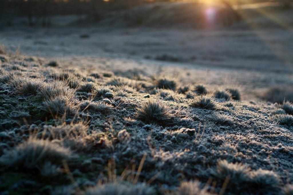 Early Morning (Robert Katzki)