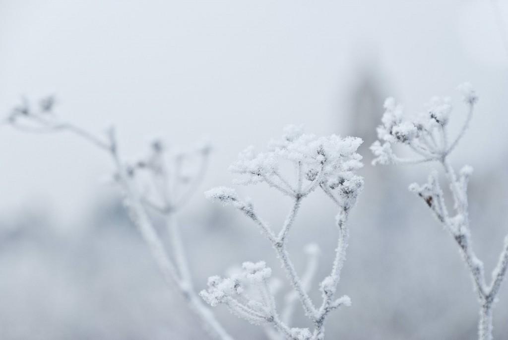 Frozen (fernando garcila redondo)