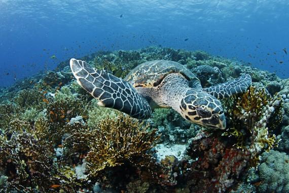 Meeresschildkröte mit High-Pass-Filter