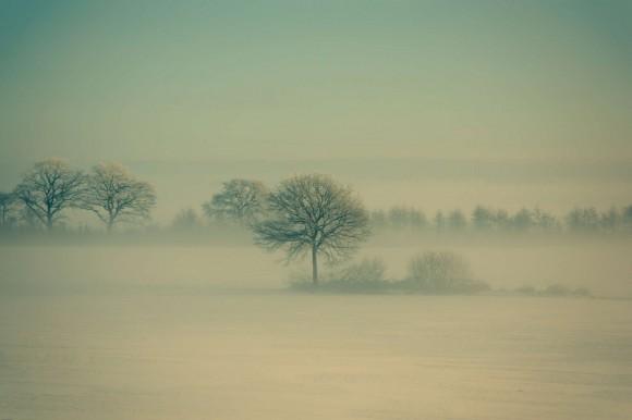 Winter Fog von Daniel Vesterskov
