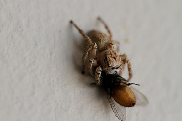 Der Spinne schmeckt es ...