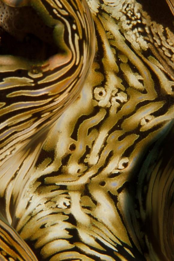 Das Innere einer Venusmuschel (F29, 1/250, ISO 200)