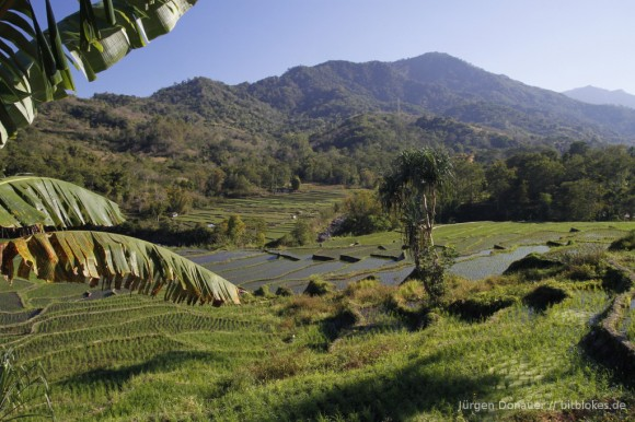 Immer wieder große Reisfelder