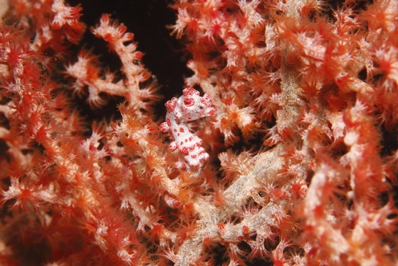 Unterwasserkamera mit einem 100mm Makro-Objektiv