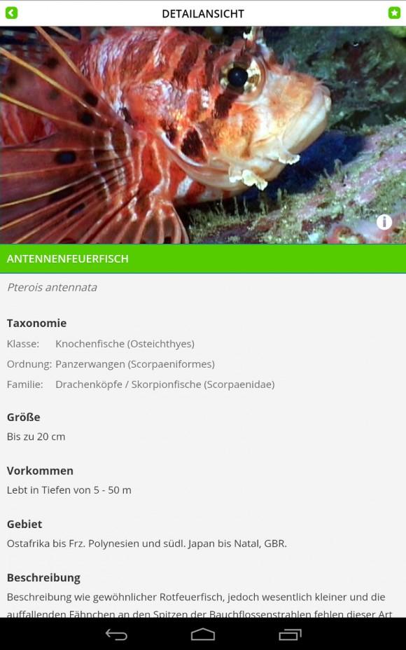 FischFinder: Rotfeuerfisch - Beschreibung