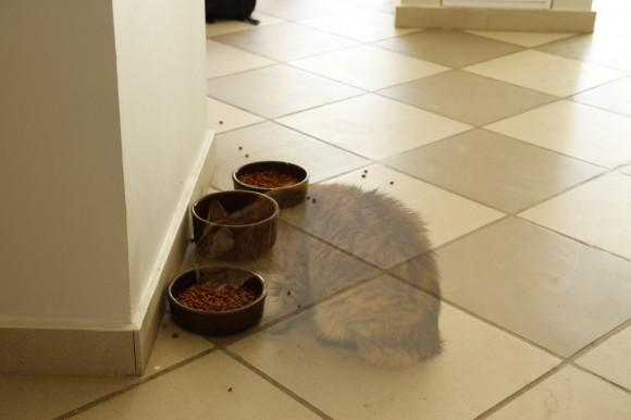 Pünktlich zu Halloween mampft eine Geister-Katze ...