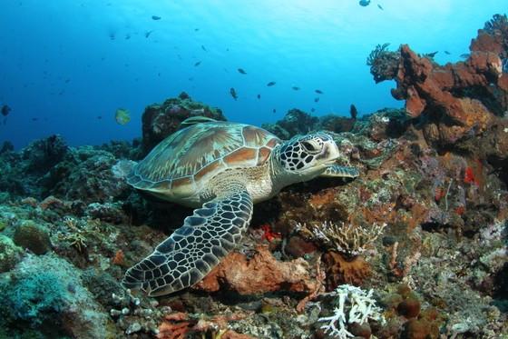 Schildkröte in Gili - hätte man mit Divine Divers sicher auch gesehen, aber ...