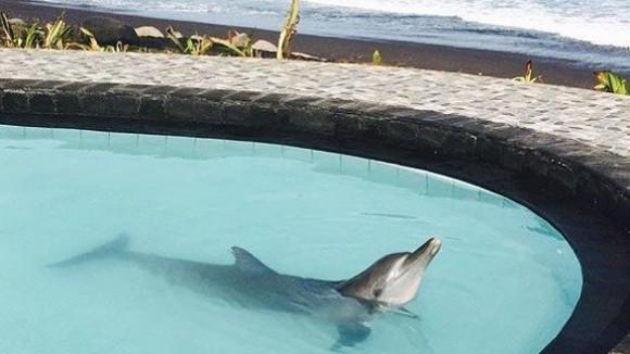 Delfine gefanen in Wake Bali