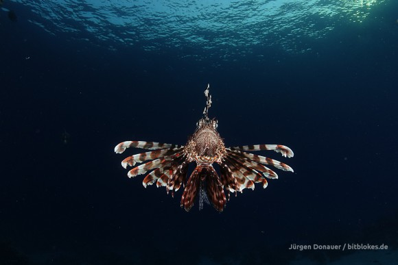 Ein mit dem Internet verbundenes Aquarium war offensichtlich keine so gute Idee