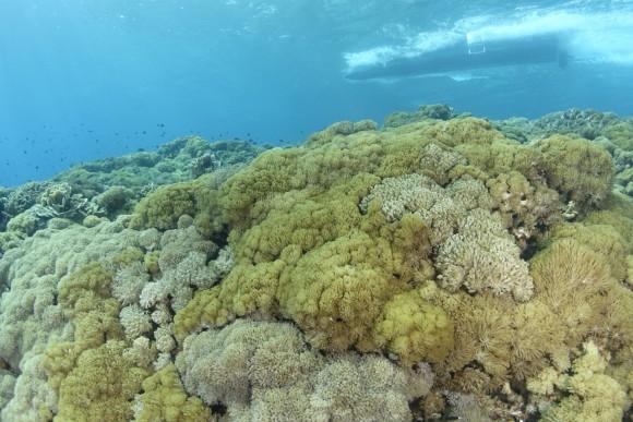 Riff in Nusam Lembongan (Norden)