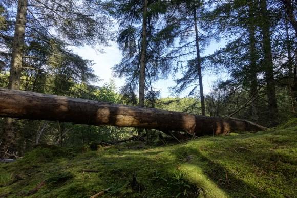 Culag Woods