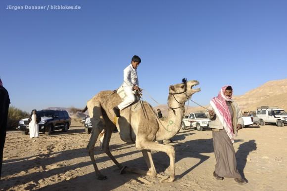 Das Kamel steht auf