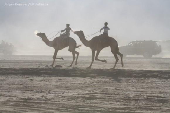 Vor Staub konnten wir die Kamele kaum noch sehen