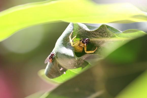 Spinne frisst Fliege und andere Fliege schaut dabei zu - Facebook abschalten und die Augen aufmachen, ist meine Devise