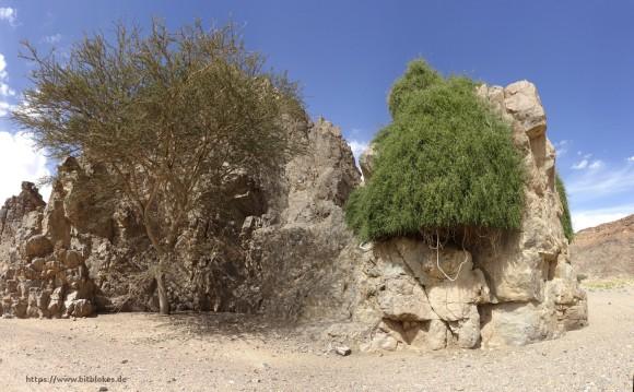Baum wächst aus Fels - also rechts